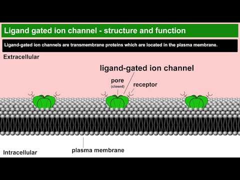 ligand-gated or chemically-gated ion channels example