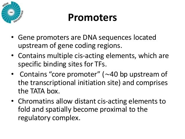 promoter sequence in dna example