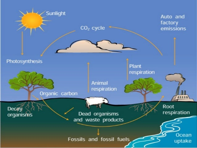 example of calculating carbon dioxide production