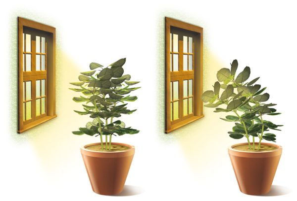 a plant bending toward light is an example of