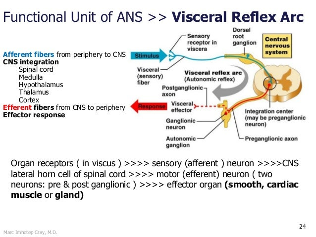 somatic nervous system function example