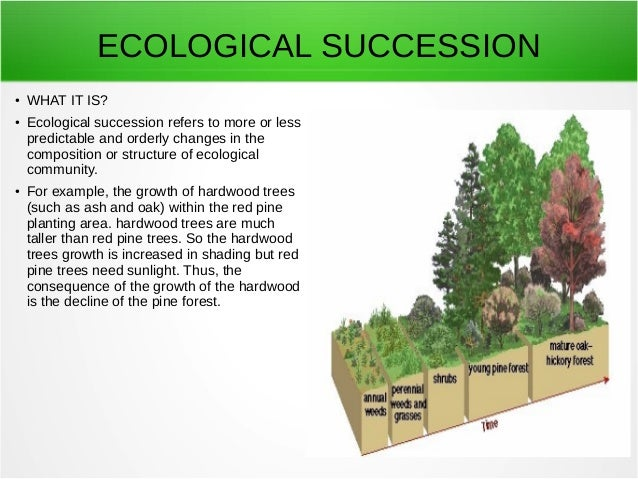 what is an example of secondary succession